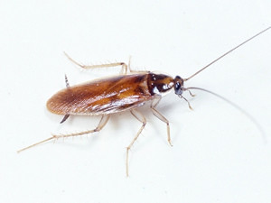 long beach cockroach removal